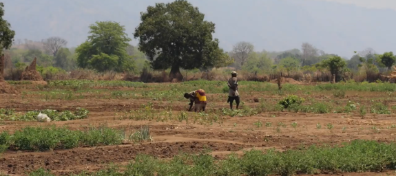 Farmers working on dry land in Malawi