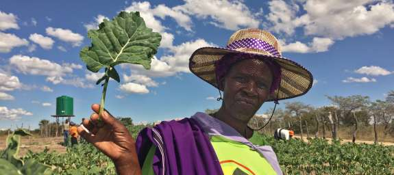 A lady in Zimbabwe tends her crops