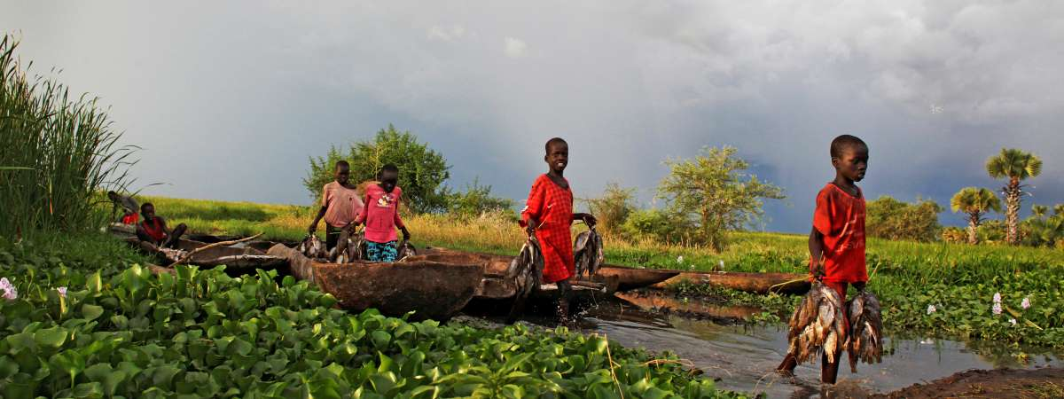 Children in South Sudan collect fish