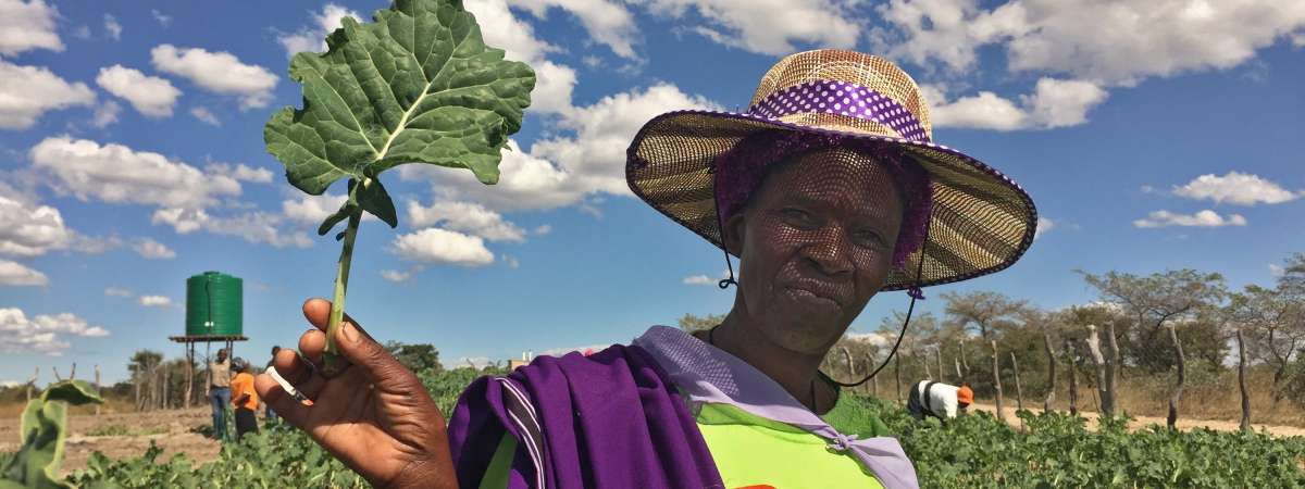 Woman tends her crops in Zimbabwe