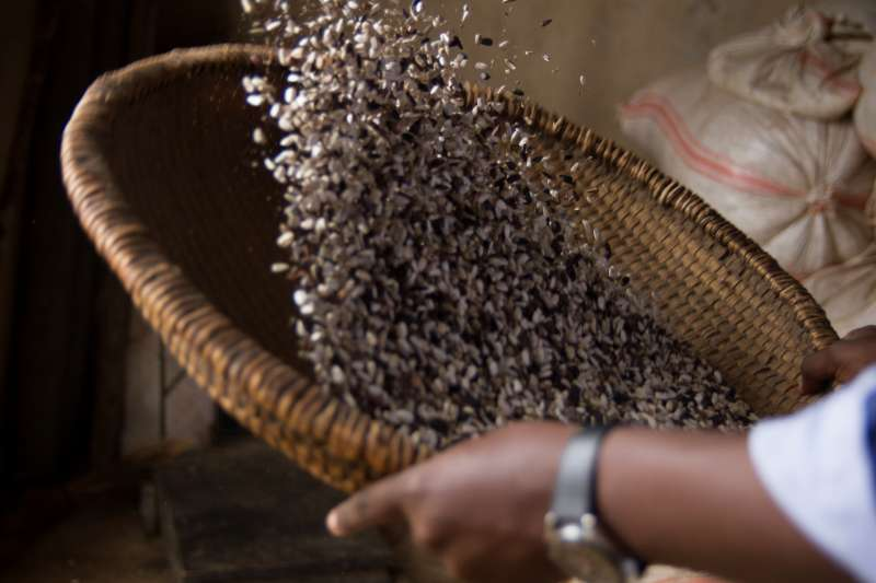 Sunflower seeds wait to be processed into oil at the Warubizi supported processing centre.
