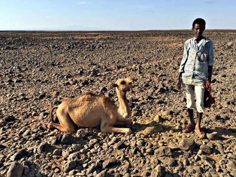 19-year-old pastoralist Mamo Toro with his dying camel in North Horr, Marsabit, Kenya