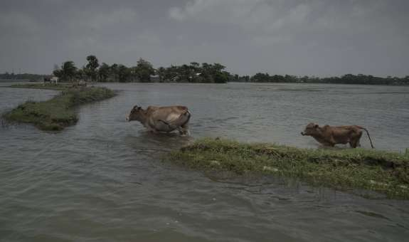 Tidal waters broke the embankment and flooded crop land, damaging crops at Lalua, Kolapara, Bangladesh