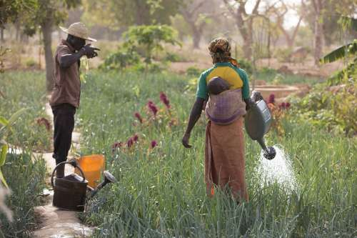 Burkina Faso - woman watering crops