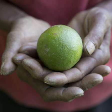Close-up of person's hands holding a lime