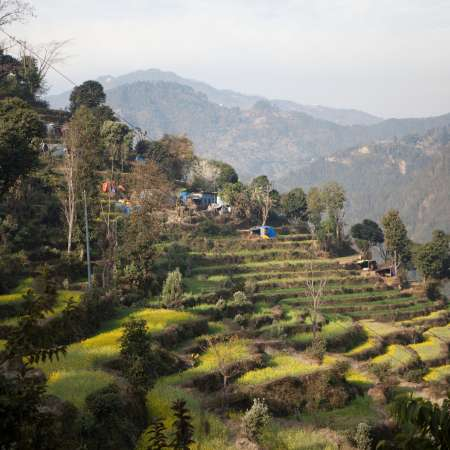 Lush green field declines in Nepal